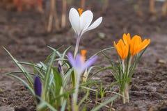 春天花在庭院里开了花 库存照片