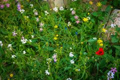 春天花在沙漠 免版税图库摄影