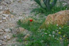 春天花在沙漠 免版税库存图片