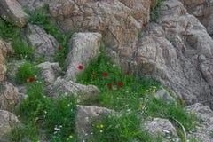 春天花在沙漠 库存图片