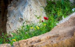 春天花在沙漠 免版税库存照片