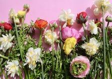 春天花在淡粉红的背景中 图库摄影