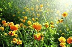 春天花在雨中 库存图片