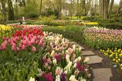 春天花在Keukenhof庭院,荷兰里 库存图片