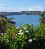 春天花在Oneroa,怀希基岛,奥克兰 免版税库存图片