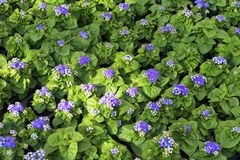 春天花幼木,盆的植物行自温室 背景绿色自然 免版税库存照片