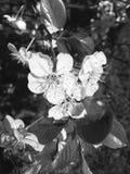 春天花开花的绿色白色蓝色阳光桃红色美好的自然 库存图片