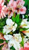 春天花束开花-白色和桃红色德国锥脚形酒杯和大丁草 免版税图库摄影