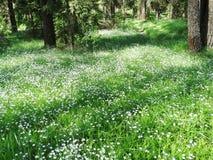春天花的森林和领域 免版税库存图片