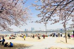 春天花节日在汉城 库存照片