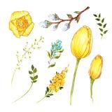 春天花黄水仙和郁金香、绿叶的杨柳和枝杈,复活节标志,画的手,酒精标志 皇族释放例证