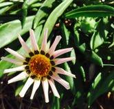 春天花,昆士兰,澳大利亚 免版税库存照片