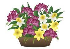 春天花-水仙和小苍兰 库存图片
