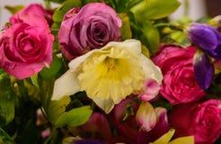 春天花-玫瑰,小苍兰 免版税库存照片