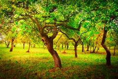 春天苹果绿的庭院 分行明亮的开花的绿色本质春天结构树 美丽的树风景在绿色庭院里在晴朗的明亮的天 库存照片