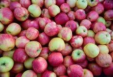 春天苹果 库存图片