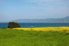 春天草和黄色花的领域 库存照片