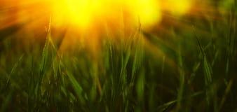 春天草在阳光下 夏天背景 墙纸 库存图片