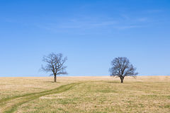 春天草甸和两棵单粒宝石树在蓝天下 免版税库存照片