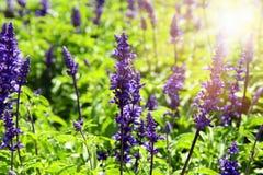 春天草甸抽象梦想的照片有野花的 免版税图库摄影