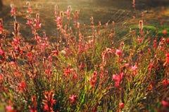 春天草甸抽象梦想的照片有野花的 免版税库存图片