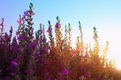 春天草甸抽象梦想的照片有野花的 免版税库存照片