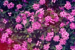 春天草甸照片有紫色野花的 库存图片