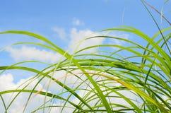 春天草,软的焦点 抽象背景本质 库存图片