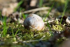 春天蜗牛 免版税库存图片