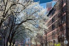 春天街道场面在纽约东方村庄  图库摄影