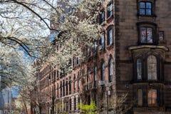 春天街道场面在纽约东方村庄  免版税库存照片