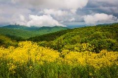 春天观点的从地平线驱动的阿巴拉契亚人在Shenandoah 库存图片