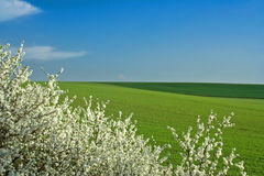 春天视图 免版税库存图片