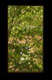 春天视窗 库存照片