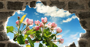 春天视窗 图库摄影