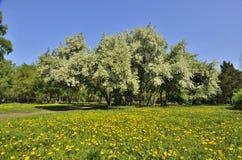 春天豪华开花的风景 库存照片