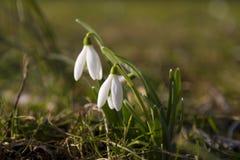 春天起始时间 库存图片