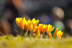 春天起始时间 免版税库存照片