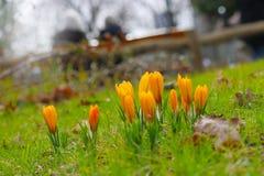 春天起始时间 免版税图库摄影