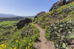 春天足迹在绍森欧克斯加利福尼亚 免版税库存照片