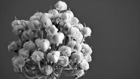 春天转向种子的葱花 免版税库存照片