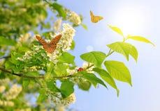 春天进展树 库存图片