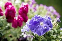 春天选择聚焦的五颜六色的花在第一朵花 免版税图库摄影