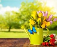 春天郁金香在木板条的花花束 库存照片