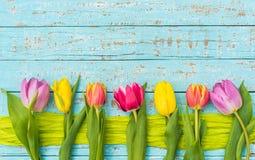 春天郁金香开花多彩多姿,与消息的拷贝空间 免版税库存图片