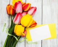 春天郁金香花和卡片 库存图片