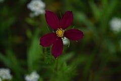 春天野花在草甸 库存照片