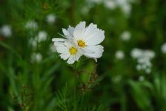 春天野花在草甸 免版税图库摄影