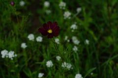 春天野花在草甸 免版税库存图片