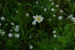 春天野花在草甸 免版税库存照片